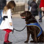 un perro ayudará a una niña con TEA