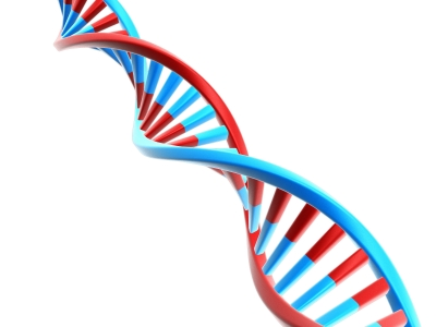 mutacion del gen SCN2A autismo